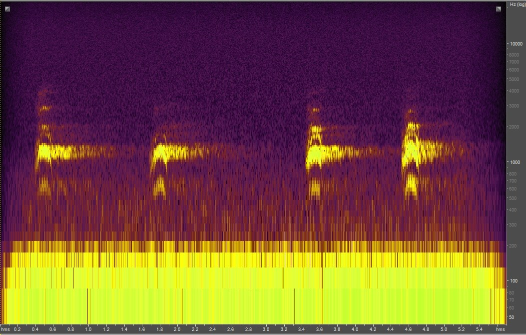 Spectrogram of common raven