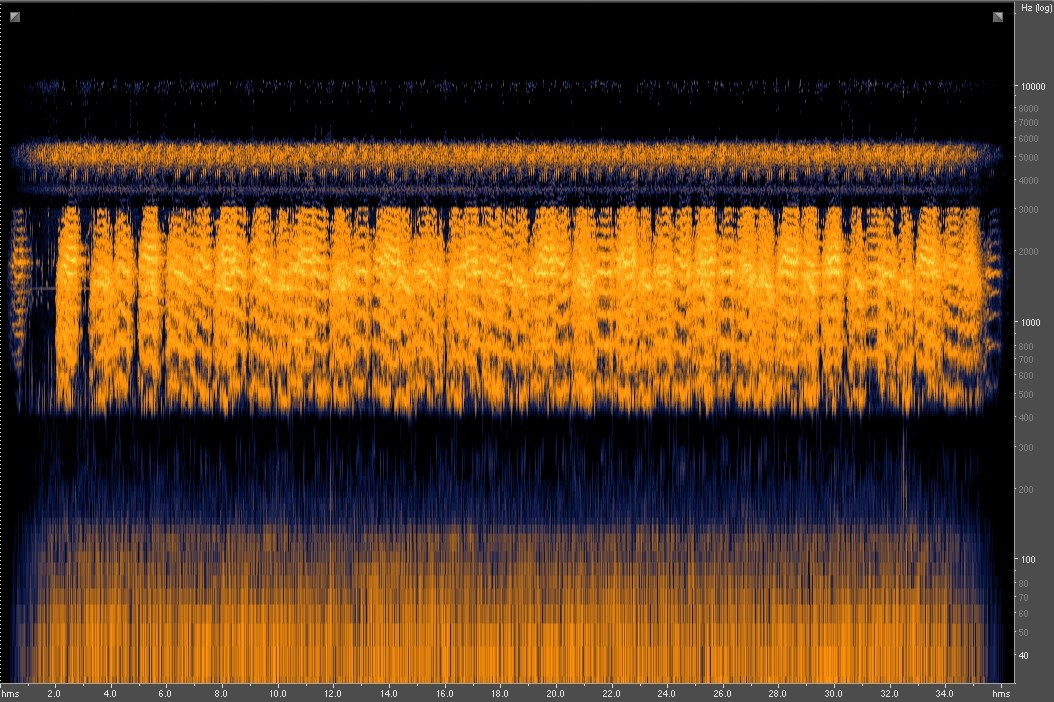 Spectrogram _ Couch's Spadefoot Toad