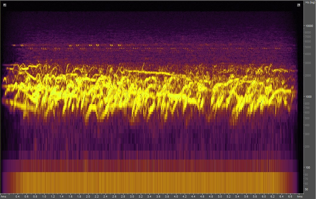 Spectrogram of coyotes