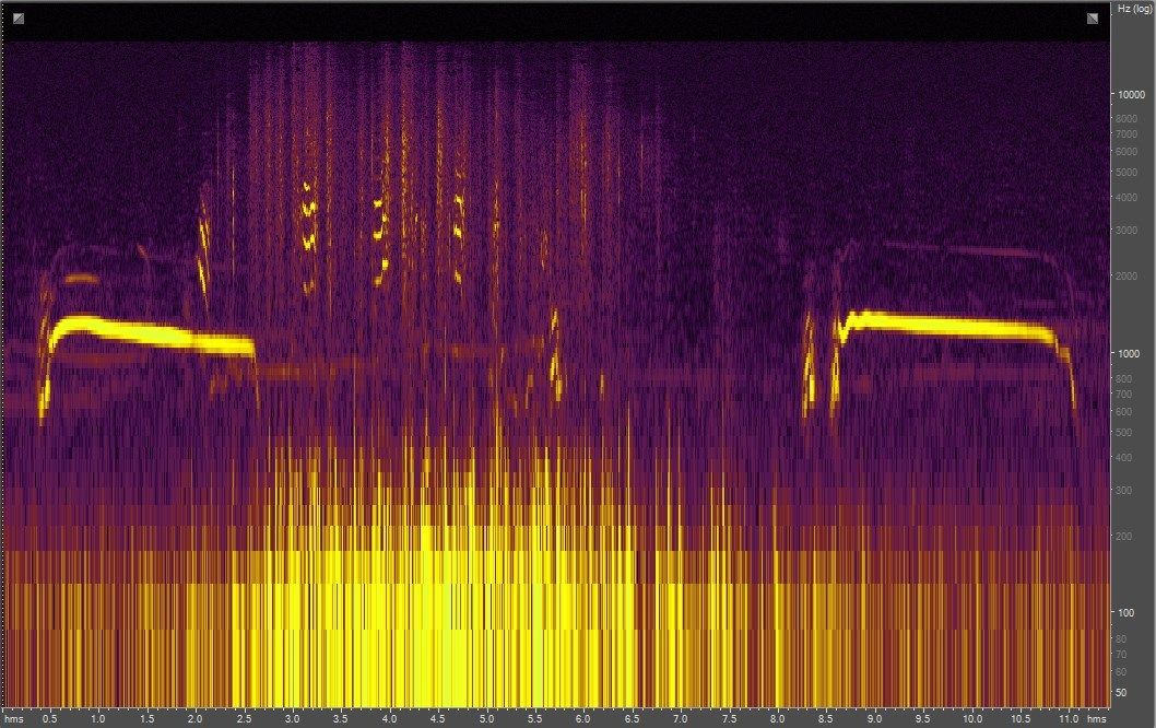 Spectrogram of coyote chase