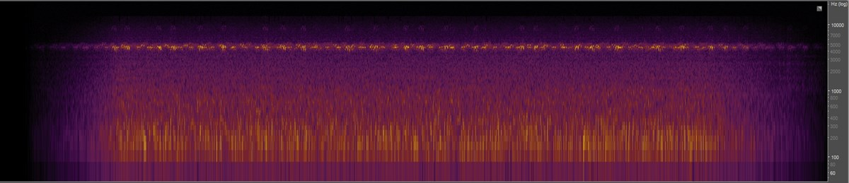 Spectrogram of crickets