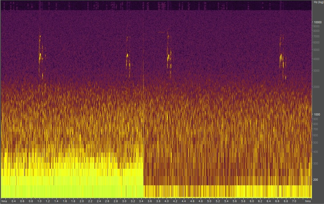 Spectrogram of a ground squirrel