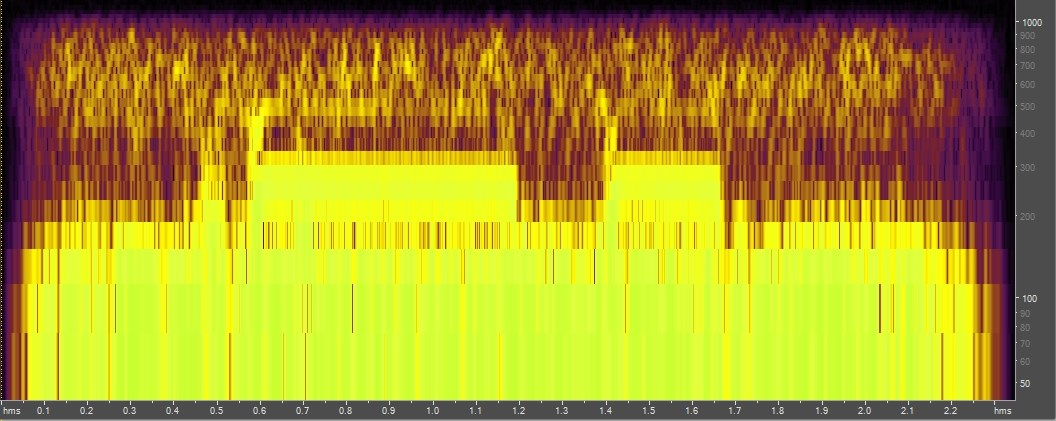 Spectrogram of Gulf toadfish