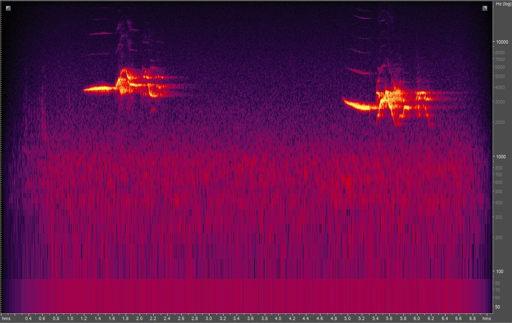 Spectrogram of hermit thrush