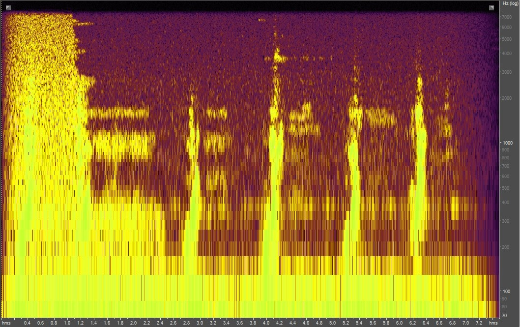 Spectrogram of a humpback whale