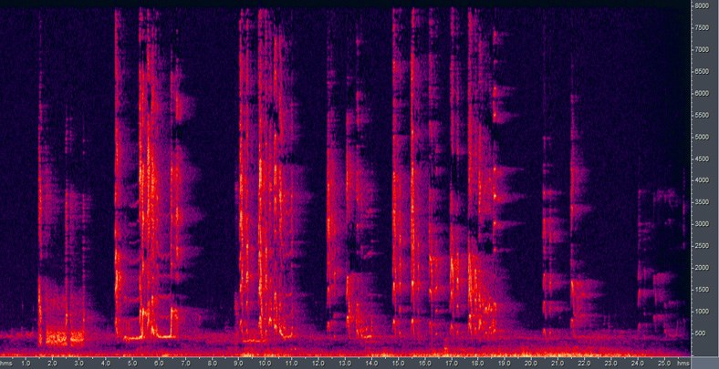 Spectrogram of 'Ua'u