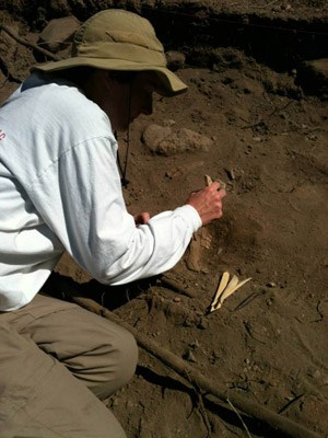 Archeologist excavating a cow jaw in the Mission Guevavi midden.