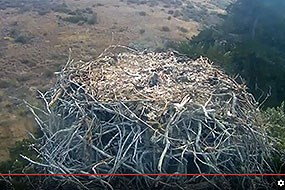 Screen shot of bald eagle cam