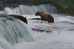 Screenshot of bear cam