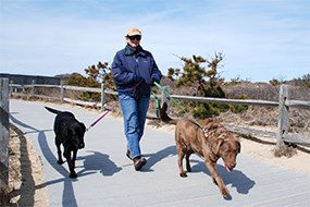 Visitor walking two dogs