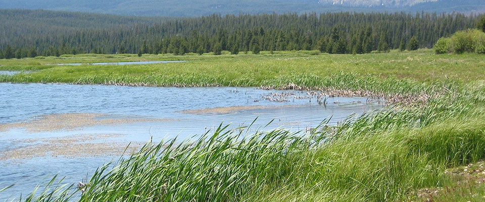 An old gravel mine was restored to marsh, pond and willow habitat at John D. Rockefeller, Jr. Memorial Parkway, Wyoming