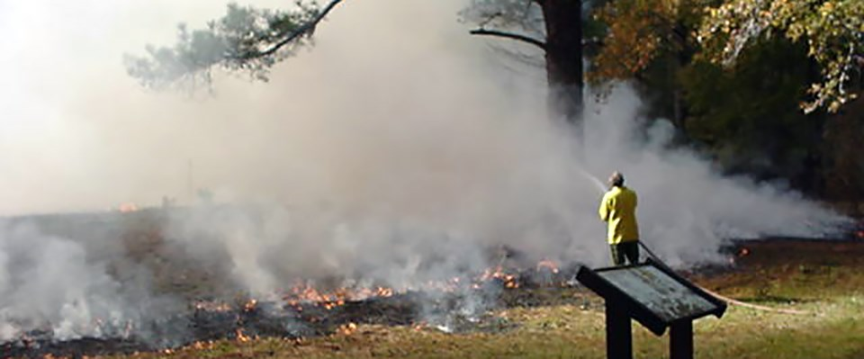 Reestablishing the natural fire regime was a critical step in restoring a wet pine savanna at Moores Creek National Battlefield, North Carolina