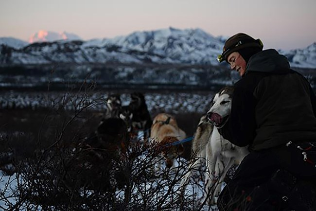 Jen Rafaelli checks on a sled dog in the wilderness.