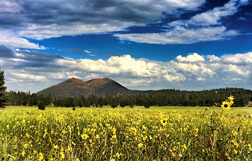 Sunset Crater Volcano and a field of yellow sunflowers beneath a partly cloudy sky.