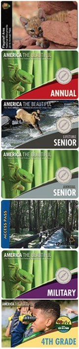National Parks passes featuring a green tree frog against a background of green palm-like leaves