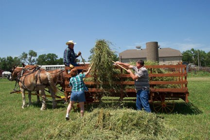 visitors pitching hay