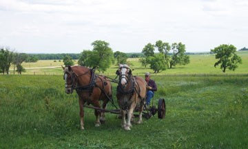 horse-drawn mowing demonstration