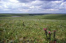 The lush green prairie during warmer months.