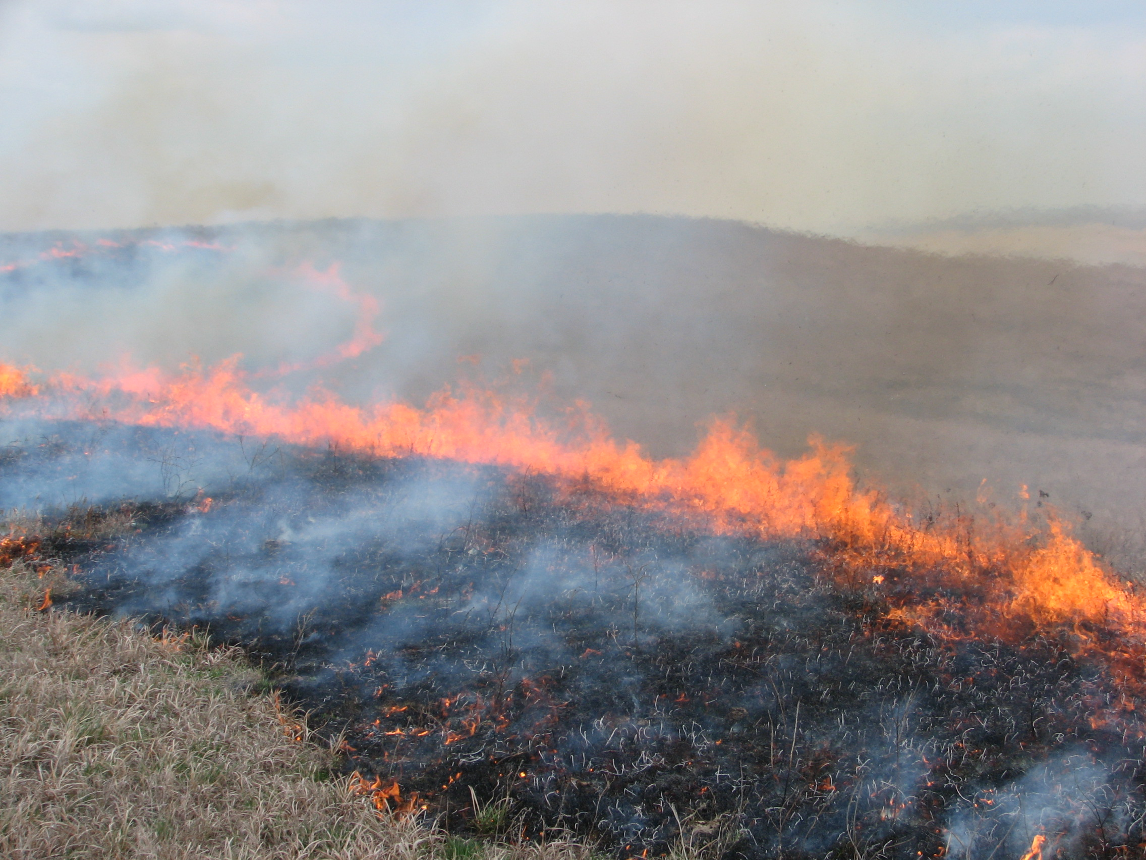 Prescribed fire on the prairie