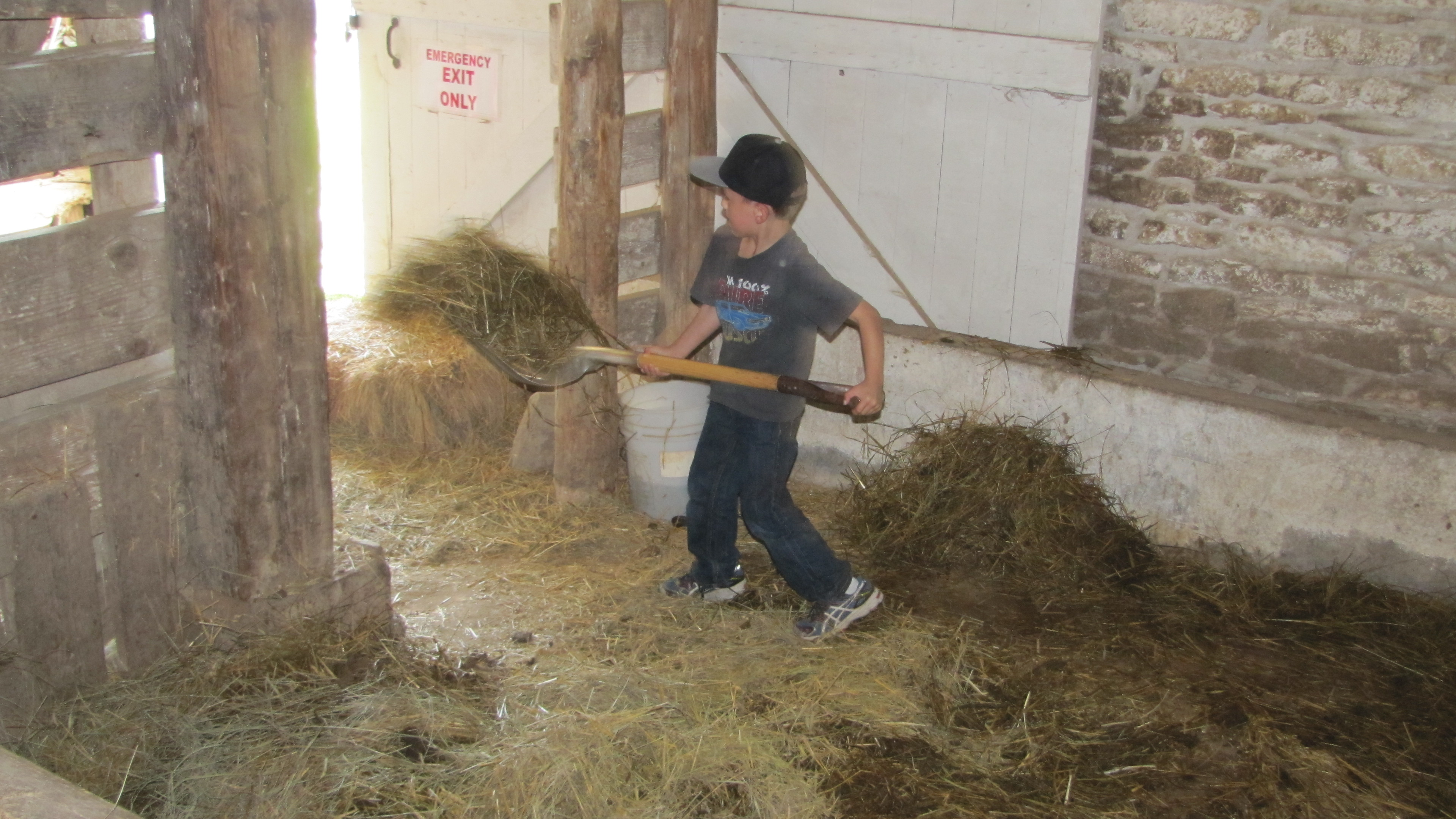 Child cleaning out the dirty hay and manure as part of kid's activities.