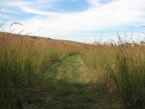 Fox Creek Trail with 6' tall grasses