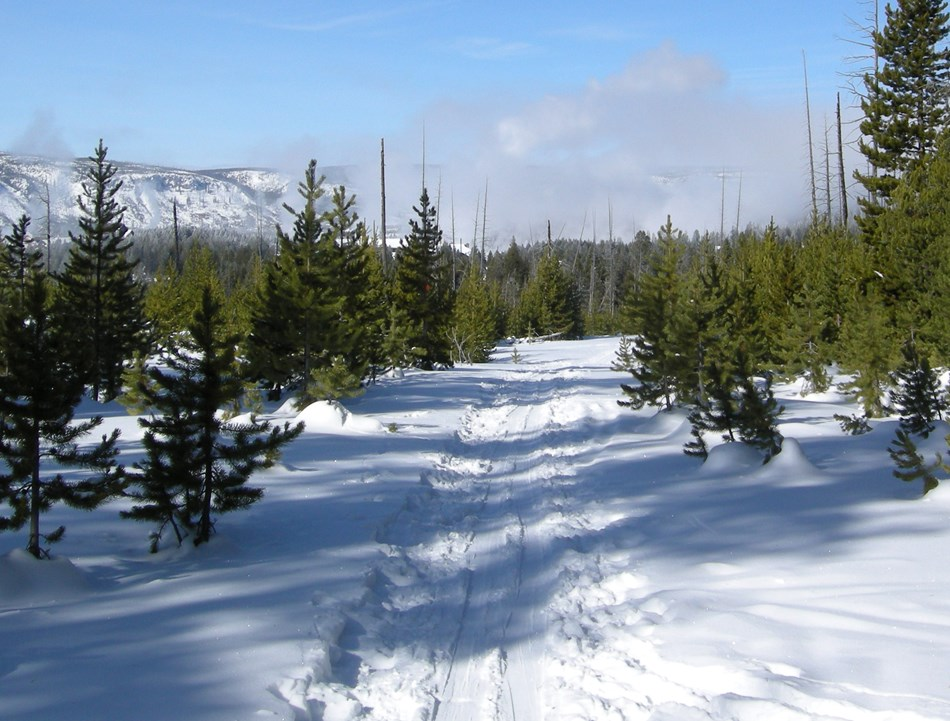 The Fern Cascades Loop Ski Trail weaves through lodgepole pine forest.