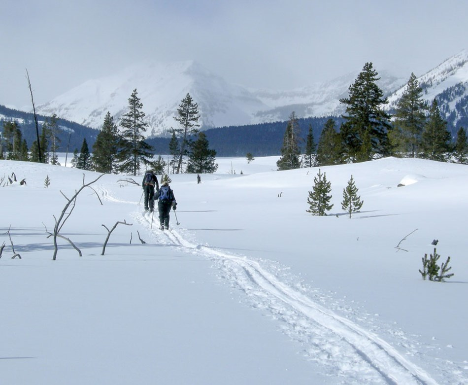 Two skiers make their way through deep snow on the Bighorn Loop Ski Trail.