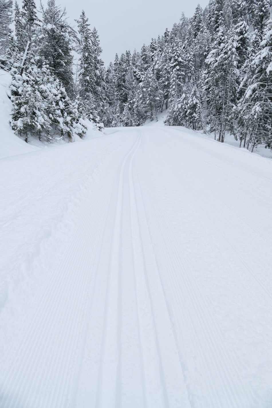 Recently groomed road with ski tracks along the road.