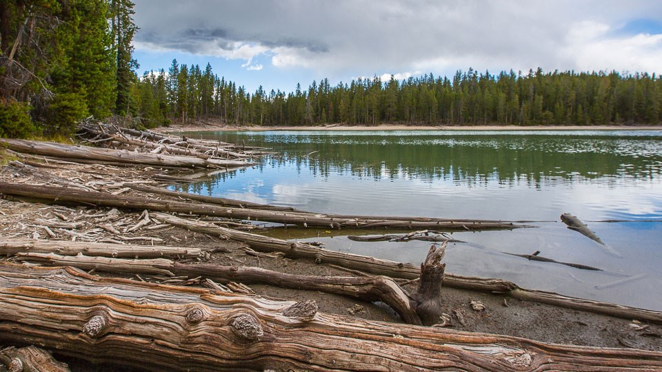 Logs litter the shore of a lake surrounded by a conifer forest.