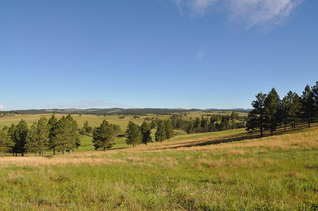 rolling prairie scenery with large stands of pine trees and mountains in the distance