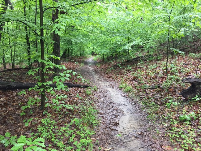 The Crossing Trail leads into the forest on a damp spring day.