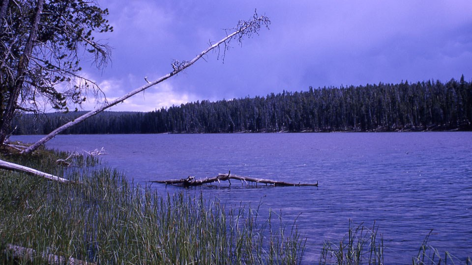 Calm, blue lake surrounded by a thick, green conifer forest.