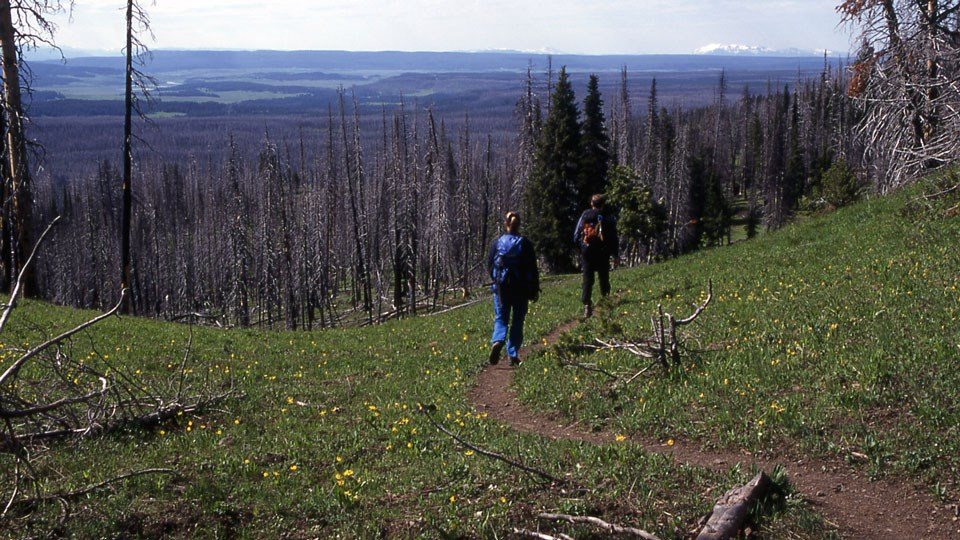Hikers along a bare ground trail that meanders through an alpine meadow.