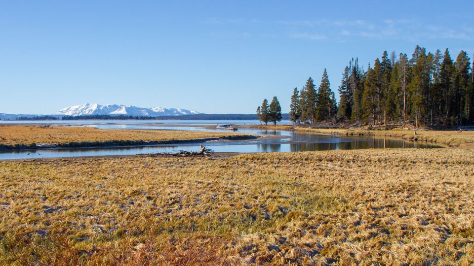 A creek meanders into Yellowstone Lake with mountains in the distance.