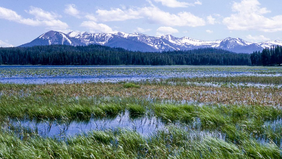 Wetlands and the water of Riddle Lake stand before snow-capped mountains.