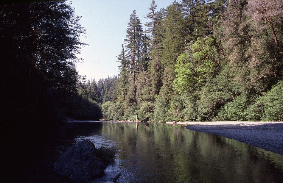 Redwood trees line the right bank of Redwood Creek