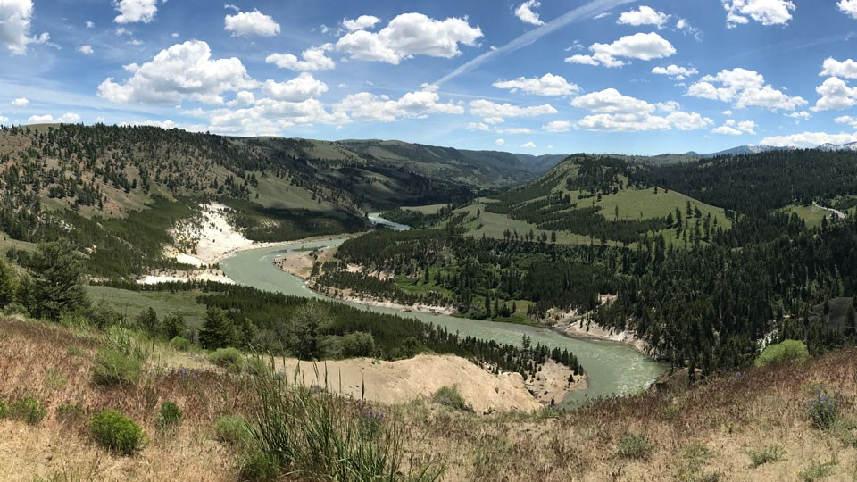 The Yellowstone River snakes its way through a valley with yellow-colored cliffs cut into the river bank