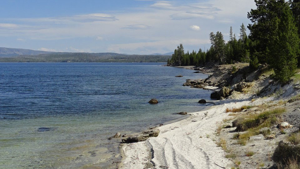 Rocky shoreline of Yellowstone Lake with conifer forests dotting the shoreline.