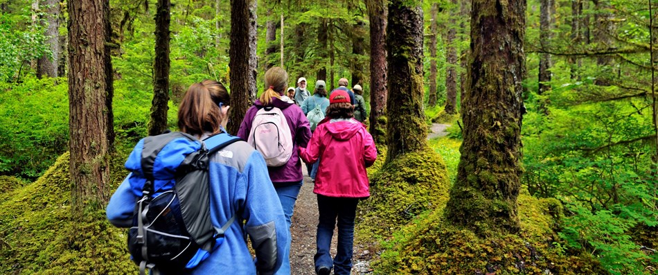 a group of people walk on a trail through a mossy rainforest