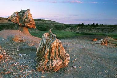 ND-Petrified-Wood