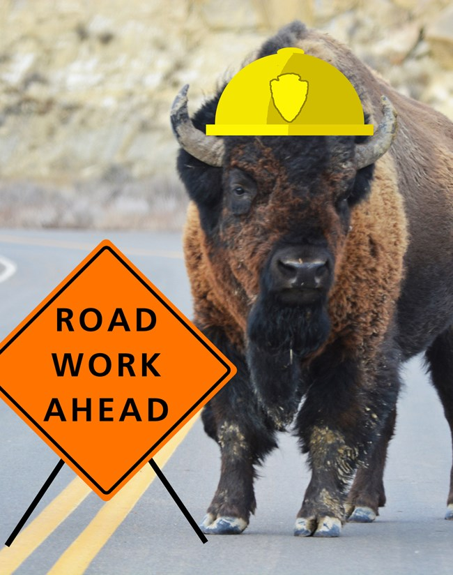 "A bison standing on a road with superimposed hard hat and construction sign reading, ""road work ahead."""