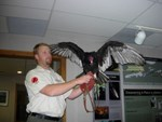 "Throughout the season, guest speakers bring live animals. Attend ""Birds of Prey"" and meet our feathered friends!"