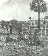 Family in field with mule team, near the slave quarters
