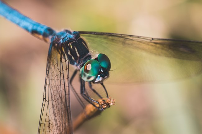a close up image of a brightly colored dragonfly
