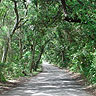 The Saturiwa Trail follows this road on Fort George Island.
