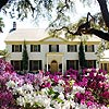Azaleas in bloom in front of the Ribault Club