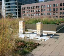 Green Roof With Beehives