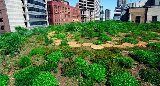 Green Roofs Plantings On Chicago City Hall