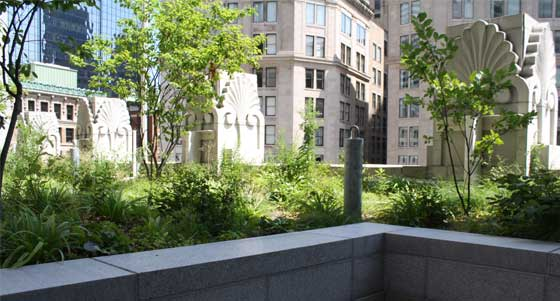 Plants For Green Roofs Technical Preservation Services