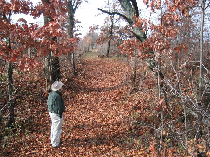 A man looks upon an old trail that is covered in leaves and lined with small trees